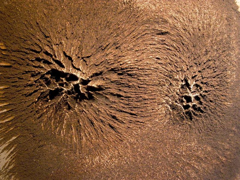 Primeval Earthscape